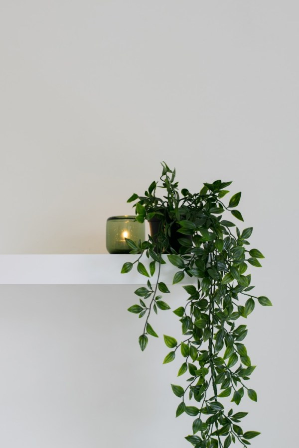 Plant on shelf