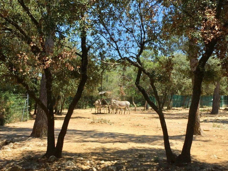 montpellier zoo