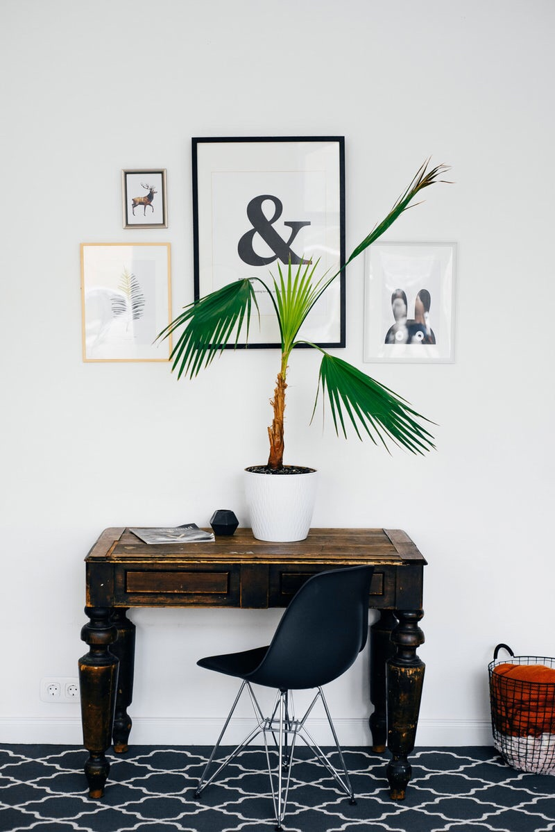 table and plant