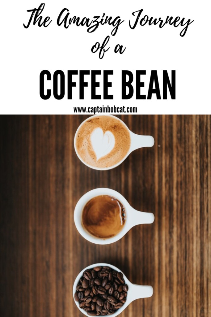 The Amazing Journey of a Fair Trade Coffee Bean