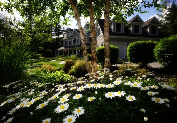 garden flowers house