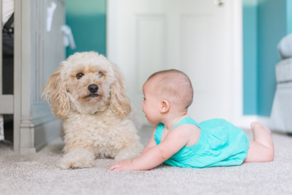 baby dog carpet: How to Remove Chocolate Stains from the Carpet