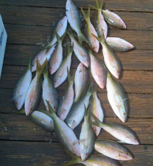 Yellowtail Snapper Fishing in Florida Keys