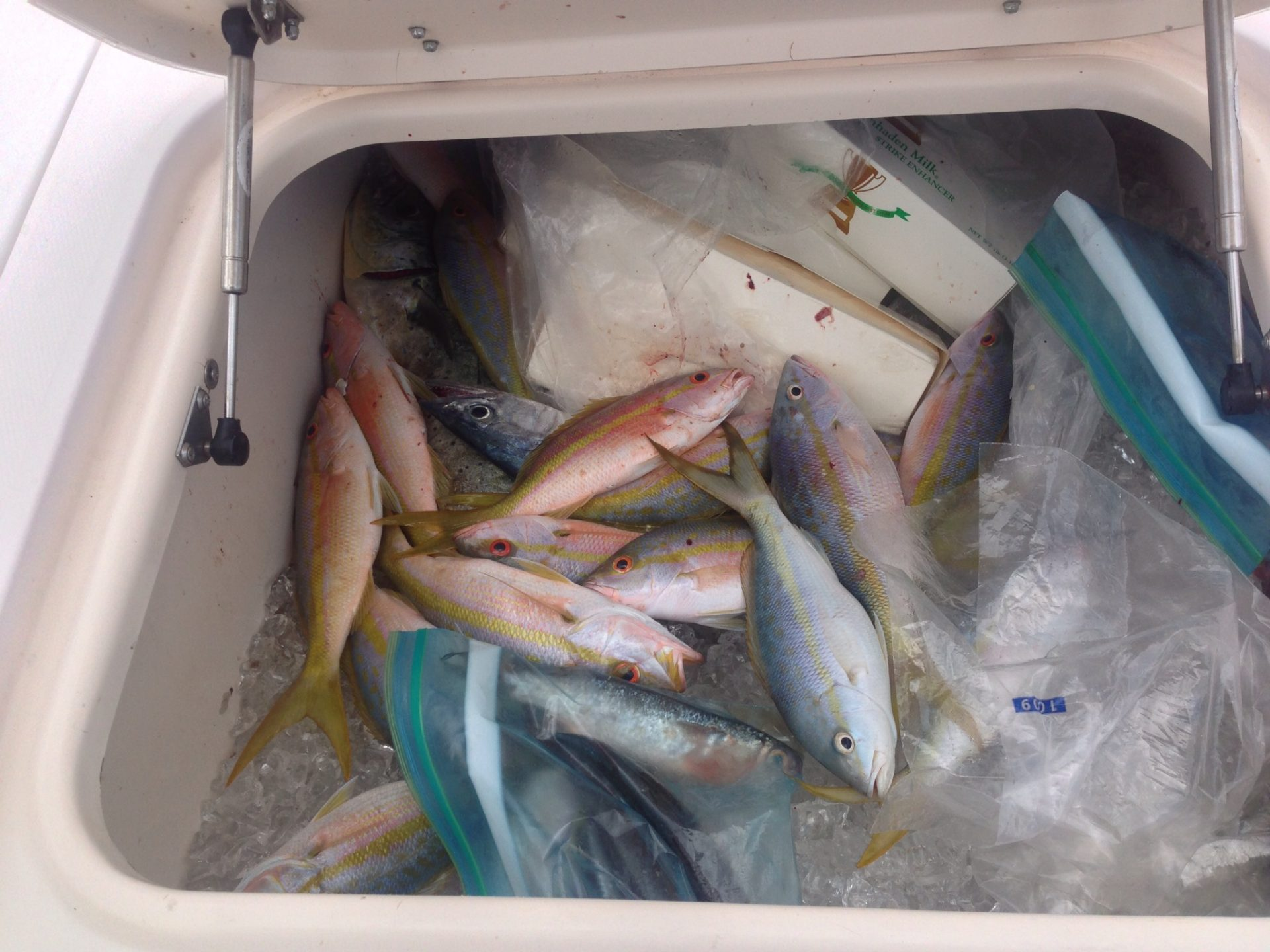 Box full of yellowtail snapper. There are plenty of yellowtail off Marathon. We caught this box full in a only a few hours!