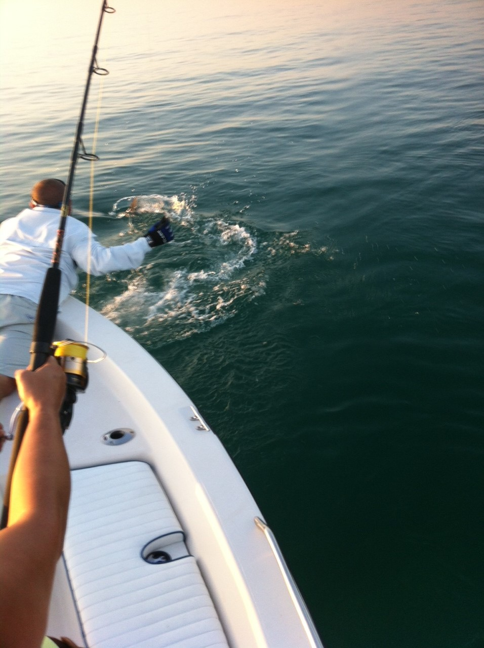 Tarpon coming to the boat for a release off theSeven Mile Bridge in Marathon. Tarpon fishing charters are prime this time of year!