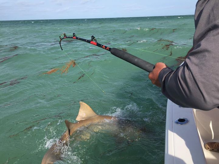 Few more pictures from today shark fishing charter. Don't let the heavy wind kee…