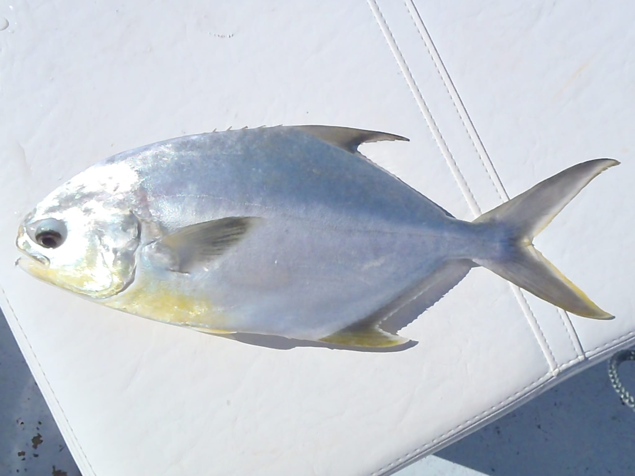 Monday december 26 2011 christmas redfish sea trout for Pompano fish good to eat