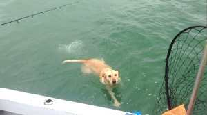 Hank taking a swim in Blind Pass on Sanibel & Captiva charters!
