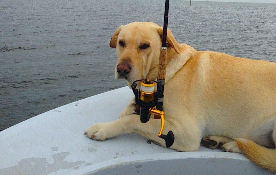 Hank, Tarpon Fishing, April 25, Sanibel & Captiva Islands & Fort Myers Charters & Fishing Guide Service.