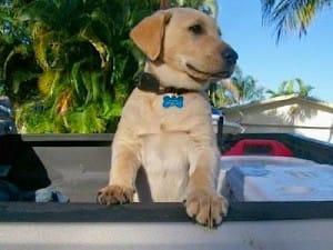 Little Hank, Sanibel & Captiva Islands & Fort Myers Charters & Fishing Guide Service.