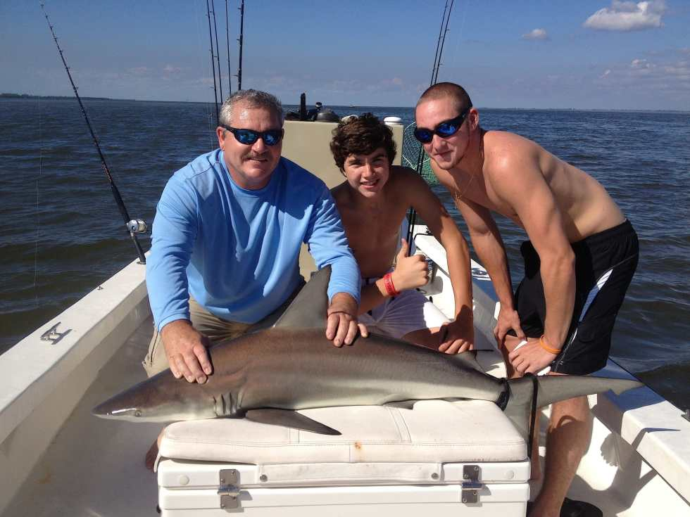 Bull shark, 9-5-14, Sanibel & Captiva Islands & Fort Myers Charters & Fishing Guide Service.