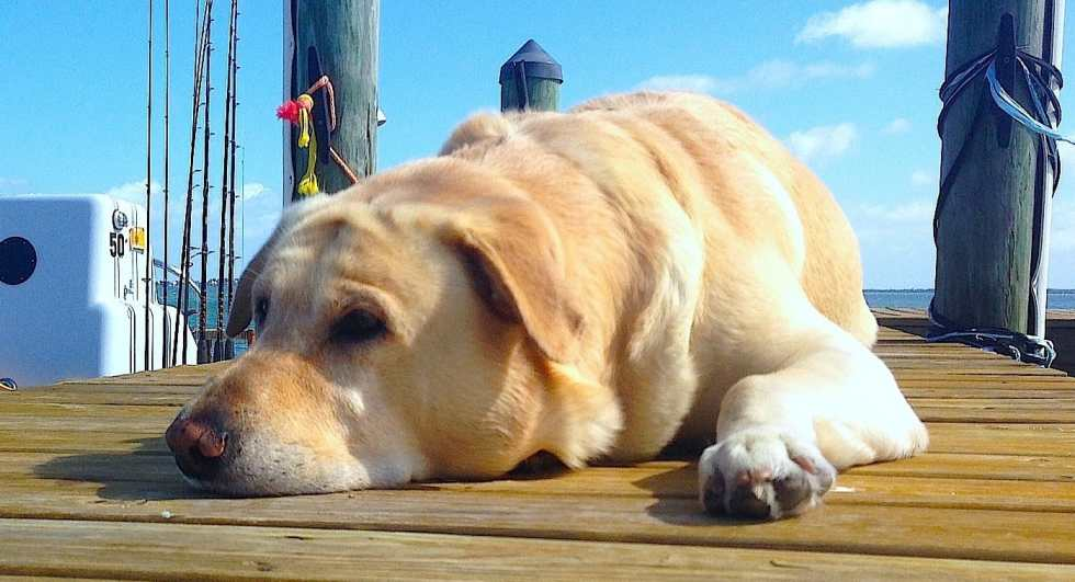 Hank dreaming about tarpon, Sanibel & Captiva Islands & Fort Myers Charters & Fishing Guide Service.