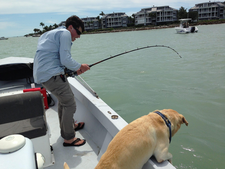 Monday 3 31 14 captiva fishing report sandbar shark for Fort myers fishing