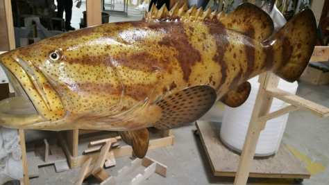 Custom goliath grouper mount