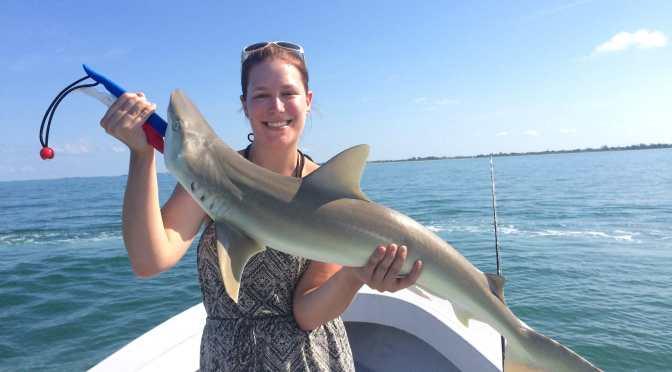 Captiva Fishing, Thursday, 8-27-15: Blacknose Sharks ~ #Sanibel #Captiva