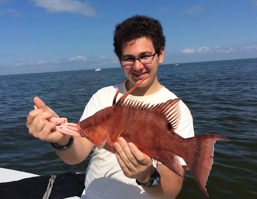 Hogfish or Hog Snapper, Sanibel Fishing & Captiva Fishing, Tuesday, 2-2-16 ~ #Sanibel #Captiva.