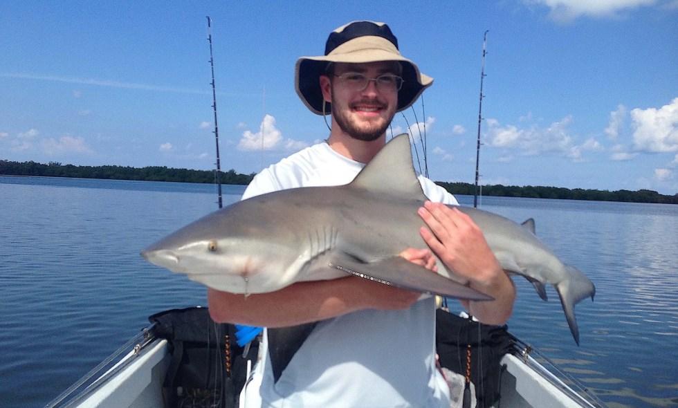 More Bull Sharks, Stealing The Tarpon Bait, Catch & Release, Sanibel Fishing & Captiva Fishing, Sanibel Island, Tuesday, August 15, 2017.
