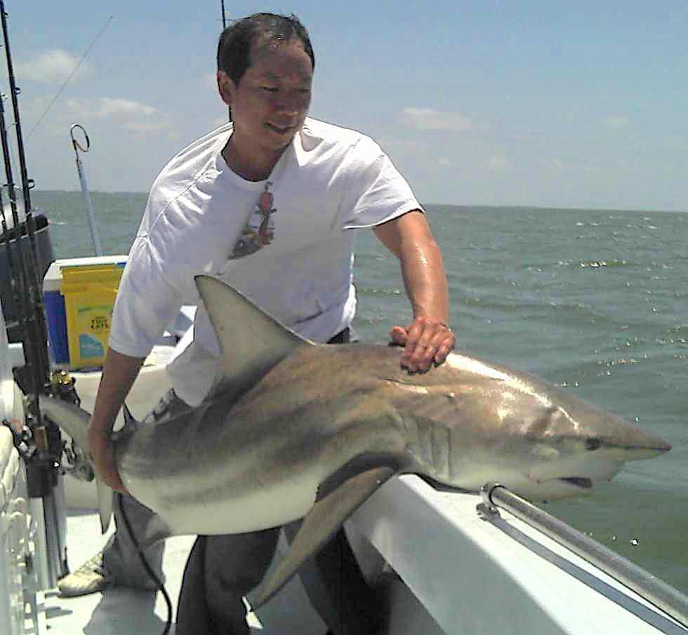Spinner Shark, North Captiva, Catch & Release, Sanibel Fishing & Captiva Fishing, Sanibel Island, Thursday, September 28, 2017 [File Photo: April 28, 2011].
