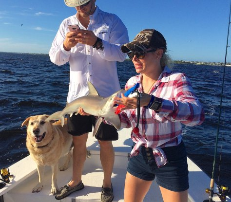 Blacknose Shark, Catch & Release, Sanibel Fishing & Captiva Fishing, Sanibel Island, Monday, February 12, 2018, [File Photo: Friday, October 13, 2017].