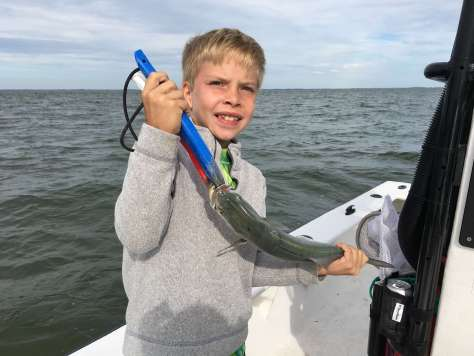 Bluefish, Catch & Release, Sanibel Fishing & Captiva Fishing, Sanibel Island, Tuesday, November 28, 2017.
