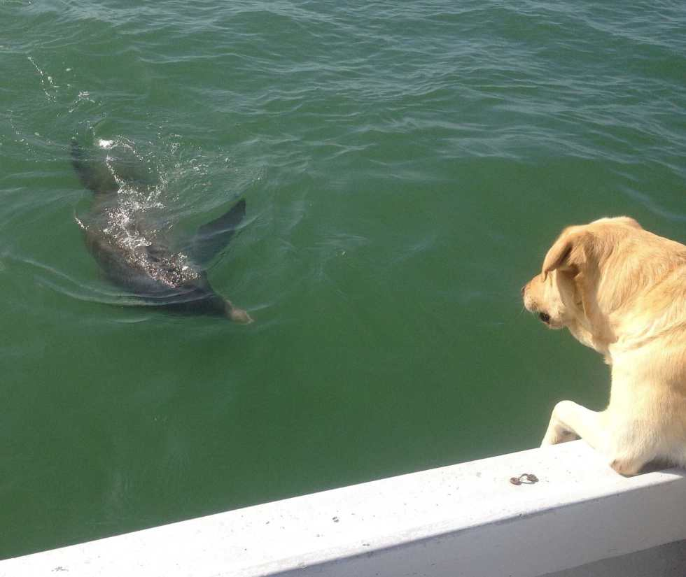 Hank Visiting With Dolphin Buddy! Captiva Fishing.