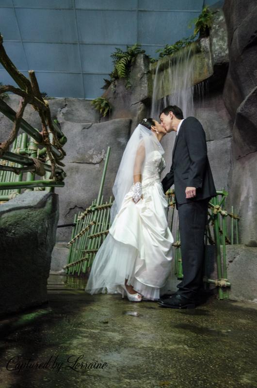 Brookfield Zoo Wedding, geneva Il wedding photographer