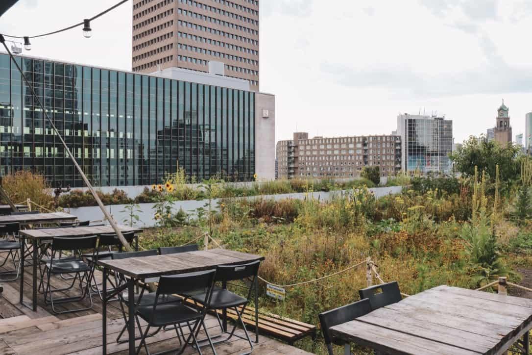 Rooftop garden ophetdak rotterdam