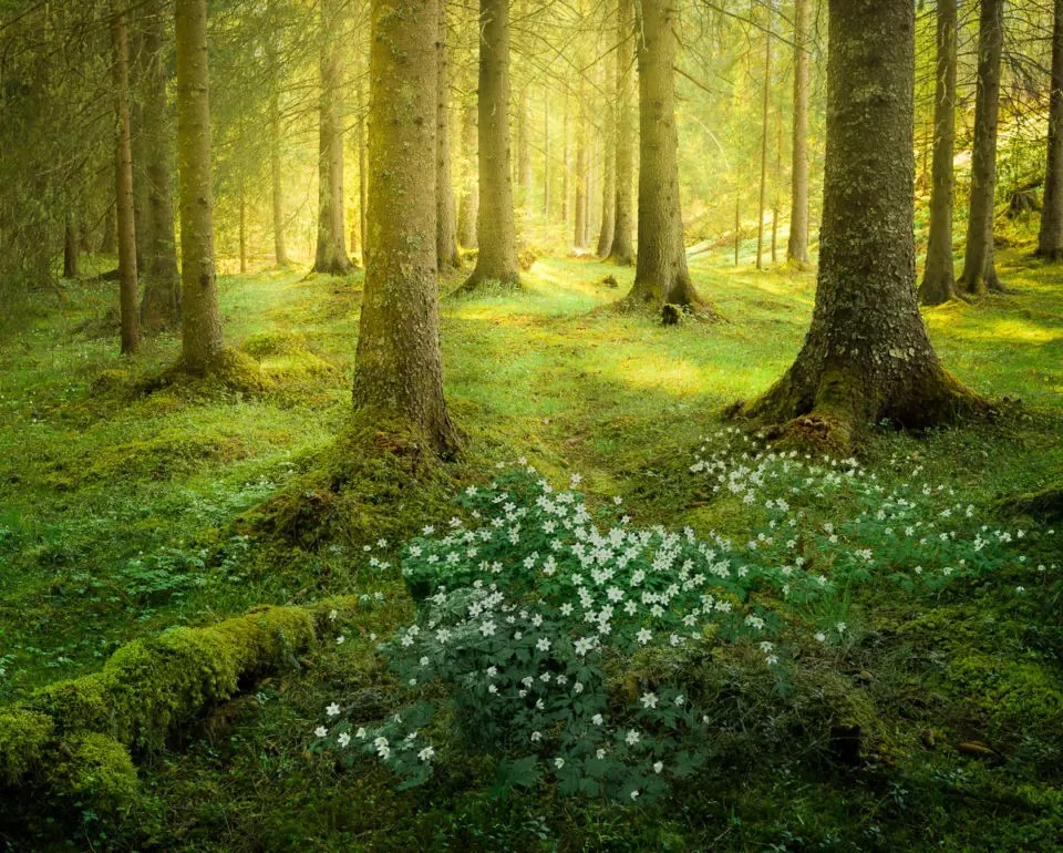 Find images of forest landscape. How To Photograph Forests And Trees Capturelandscapes