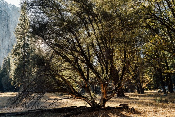 photographer-yosemite-usa-california-072