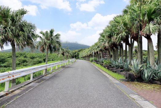 椰子の木が印象的な島