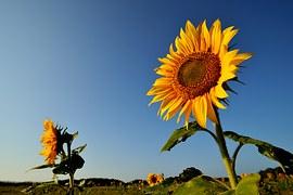 flower-1091528__180