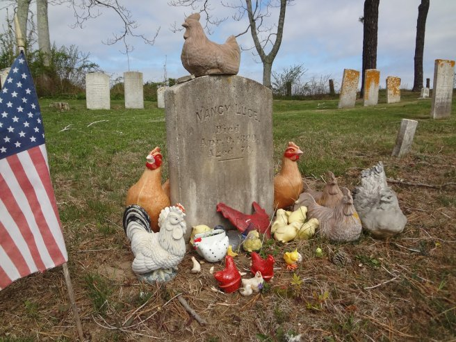 Nancy Luce and a Tribute to Her chickens