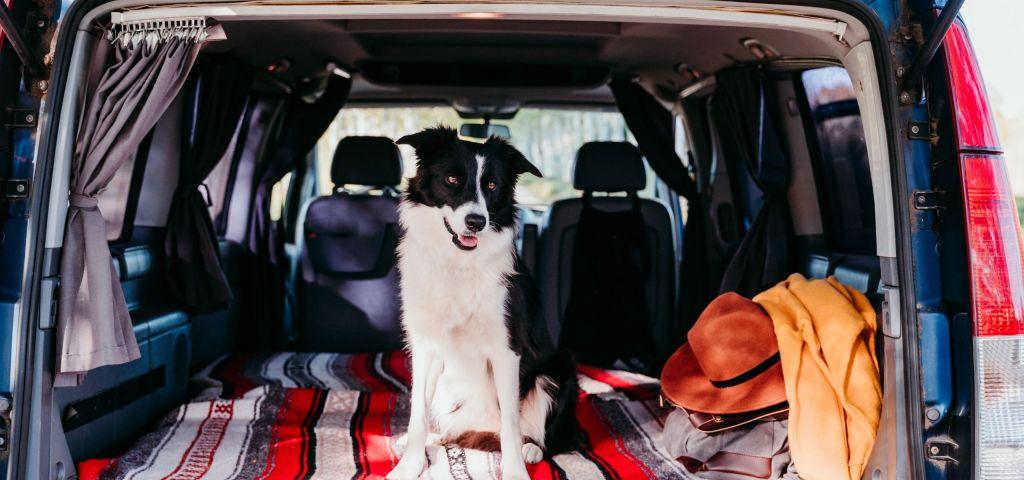 viajar con perros en furgoneta
