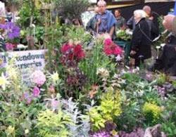 Tavistock Garden Festival