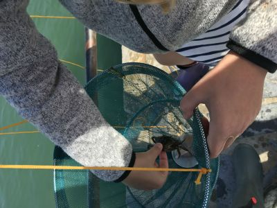 things to do - crabbing