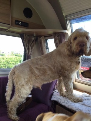 dog on caravan drivecation