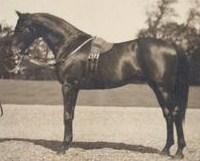 persimmon_1893