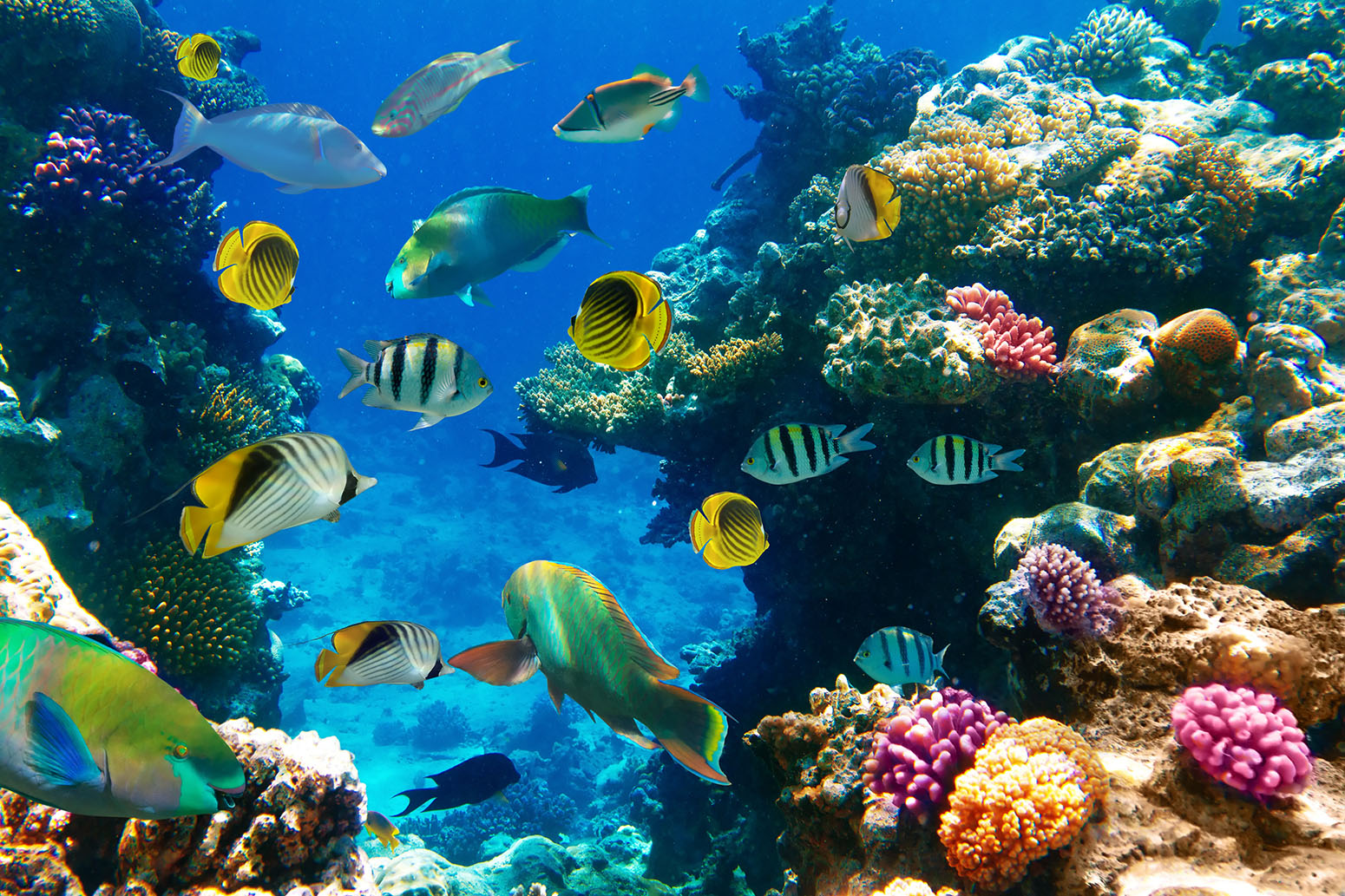 Warming Tropical Oceans Could See Widespread And Intense