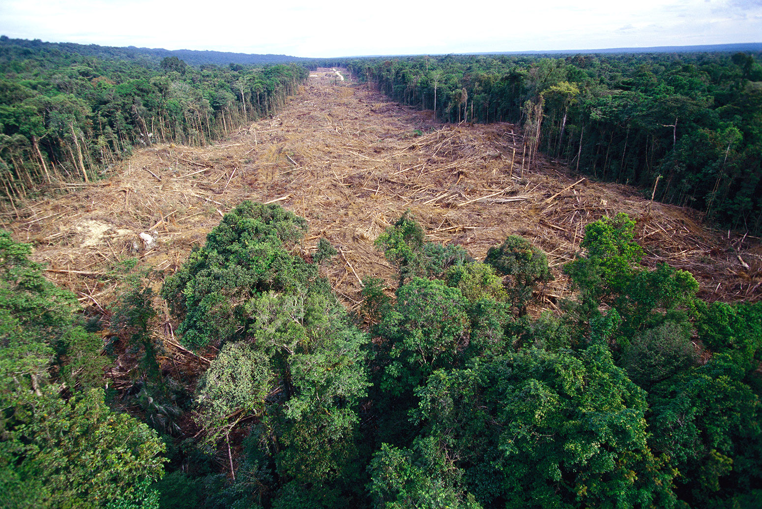 deforestation is occurring all over the world, with all types of forests, and is one of the top environmental issues today. Deforestation Has Driven Up Hottest Day Temperatures Study Says Carbon Brief