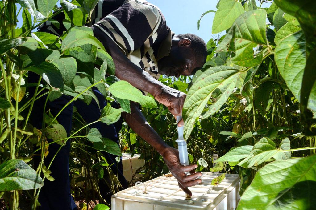 Test de la santé des sols en mesurant les fuites d'azote dans l'ouest du Kenya. Crédit: CIAT / (CC BY-NC-SA 2.0).