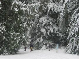 SNOW FOR CHRISTMAS!