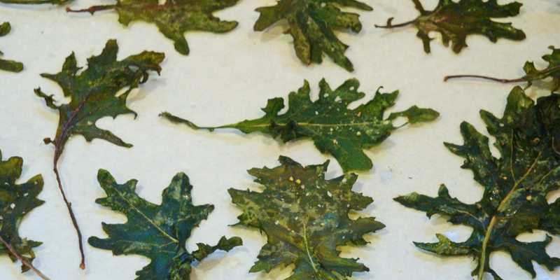 NEW AND IMPROVED KALE CHIPS