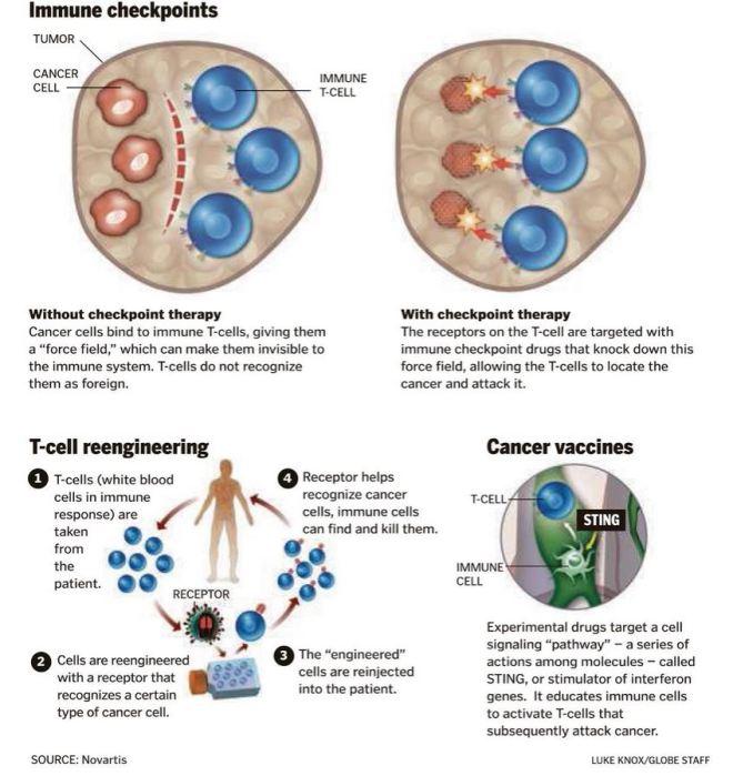 Novartis Developing New Drugs in Immuno-Oncology