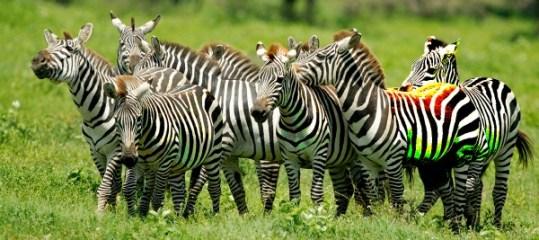 NEPA Zebra's carcinoid and neuroendocrine tumor support group, Pennsylvania