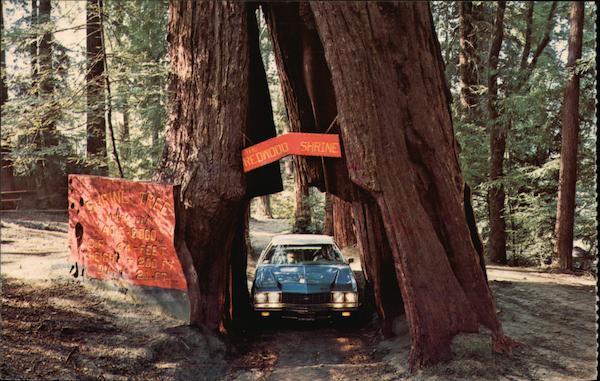 Original Drive Thru Tree Historical Shrine Tree Redwood