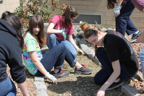 DCC Rotary Interact Club Plants Flowers in the Gardens