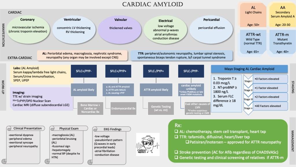 Cardiac Amyloid with the Cardionerds Cardiology Podcast. Graphic by Dr. Carine Hamo