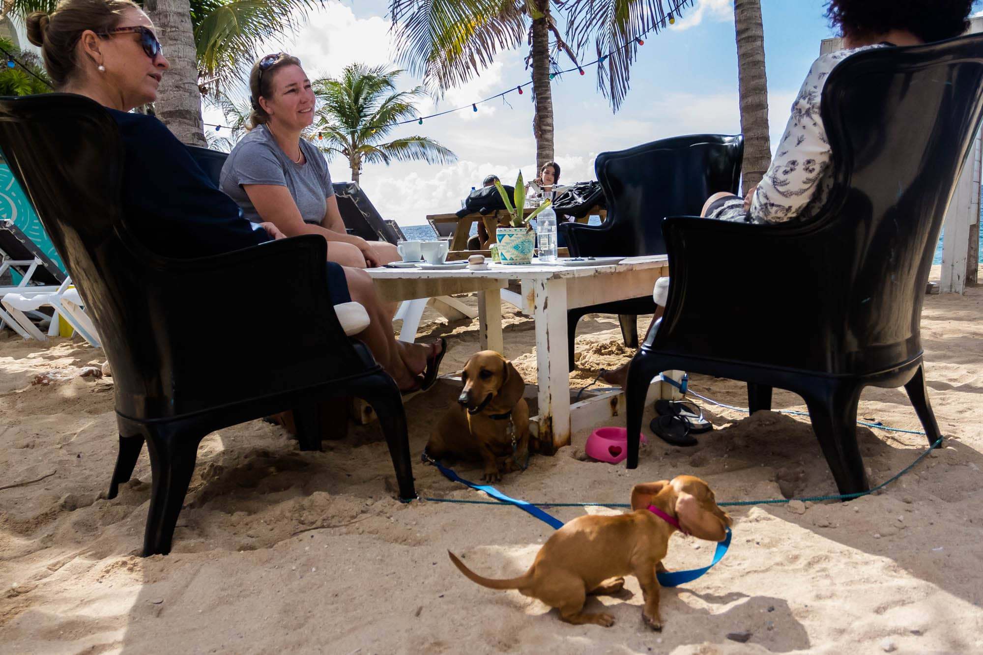 Guests and their dogs visiting Dive City Curacao in the Pietermaai District.