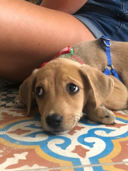 puppy Jill