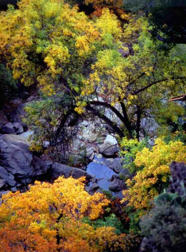 best places for color in Texas, Lost Maples State Natural Area, Fall color in Texas Hill Country,